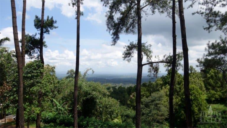 Pemandangan dari Hutan Pinus Gogoniti