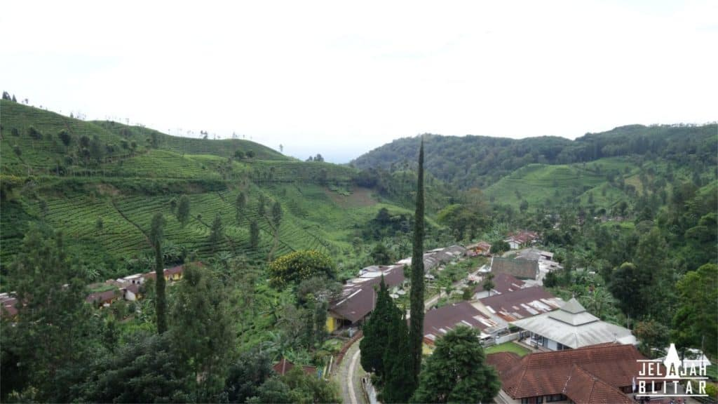 Kawasan Perkebunan Teh Sirah Kencong Blitar