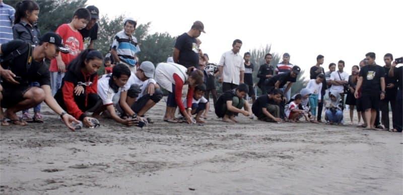 Pelepasan Tukik di Pantai Serang