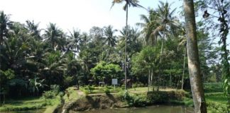 Situs Sukosewu di Gandusari