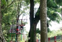 Flying Fox di Kebon Rojo