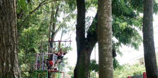 Flying Fox di Kebon Rojo