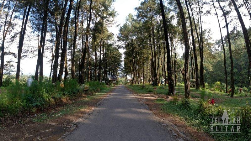 Hutan Pinus Loji Blitar